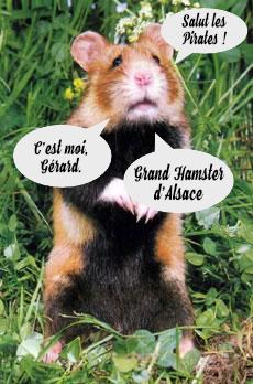 Grand-Hamster-Alsace